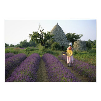 France, PACA, Vaucluse, Woman in a lavender Photographic Print