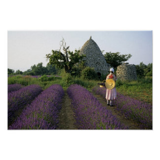 France, PACA, Vaucluse, Woman in a lavender Poster