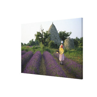 France, PACA, Vaucluse, Woman in a lavender Stretched Canvas Print