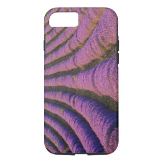 France, Provence Region. Orderly rows of iPhone 7 Case