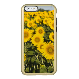 France, Provence, Valensole. Field of Incipio Feather® Shine iPhone 6 Case
