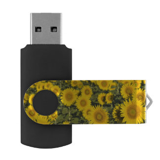 France, Provence, Valensole. Field of USB Flash Drive