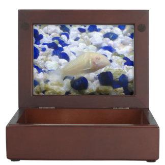 Francis the albino cat fish keepsake box
