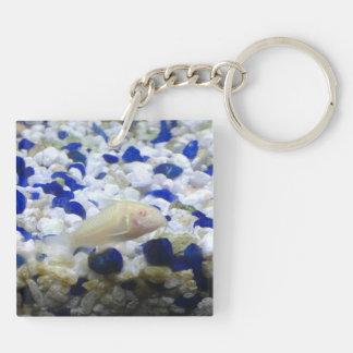 Francis the albino cat fish key ring
