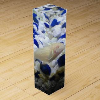 Francis the albino cat fish wine box