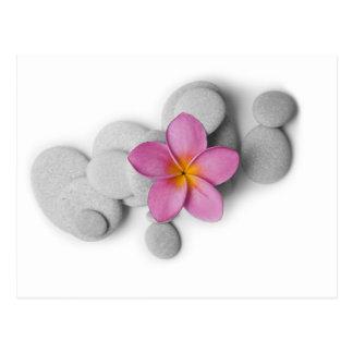 Frangipani Calm Post Cards