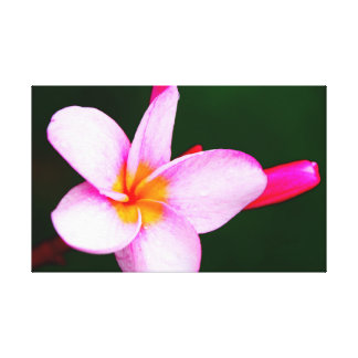 Frangipani flower canvas print