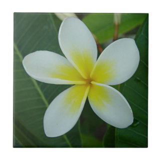 Frangipani Flower Ceramic Tile