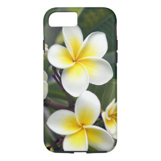 Frangipani flower Cook Islands iPhone 7 Case