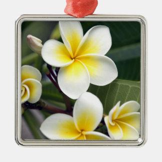 Frangipani flower Cook Islands Silver-Colored Square Decoration