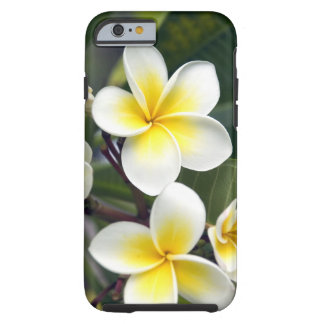 Frangipani flower Cook Islands Tough iPhone 6 Case