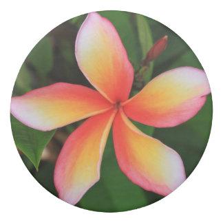 Frangipani flower eraser