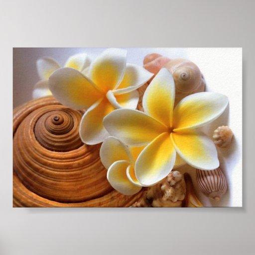 Frangipani flower print