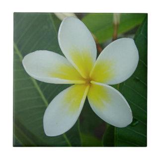 Frangipani Flower Small Square Tile