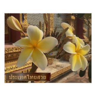 Frangipani Flowers in Thailand Poster