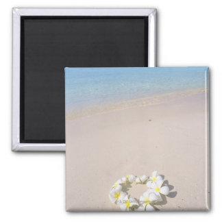 Frangipani on the beach magnet