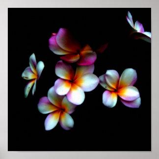 frangipani photo print