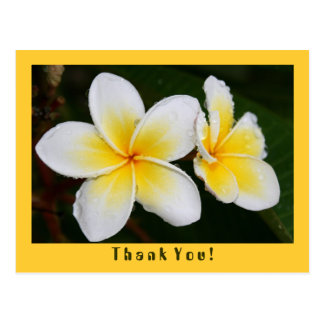 Frangipani Post Cards