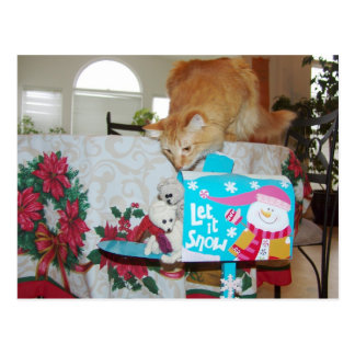 Frank&Leo: He is here! Santa? No, the cat! Postcard