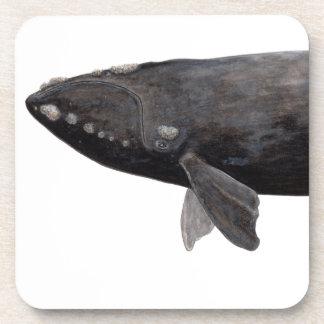 Frank whale of Atlantic Coaster