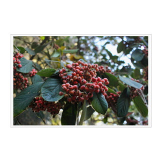 Franklin Canyon Park Berries Acrylic Print