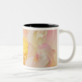 Franklin NC, Perry's Water Garden, Lotus with Two-Tone Mug