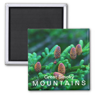 Fraser Fir - Great Smoky Mountains National Park Square Magnet