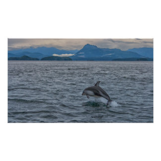 Free Dolphin Poster