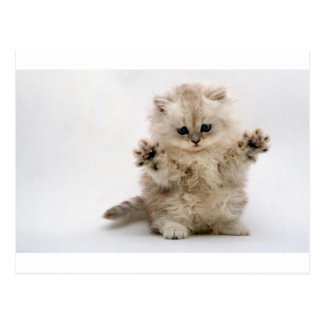 Free Hugs Kitten Postcard