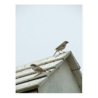 freedom bird postcard