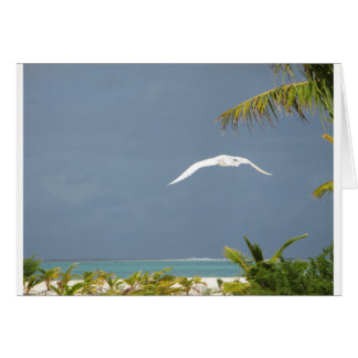 Freedom in Peaceful Paradise Card