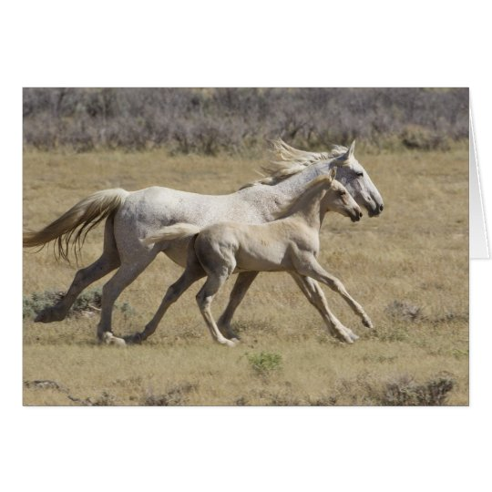 Freedom Runs Wild Horse Greeting Card