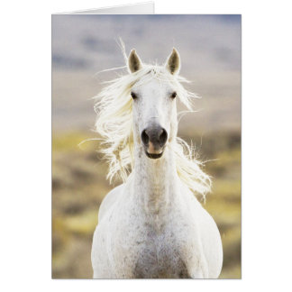 Freedom's Call Wild Horse Greeting Card