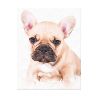 French bulldog. gallery wrapped canvas
