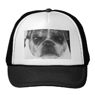 french-bulldog cap