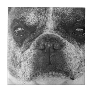 french-bulldog ceramic tile