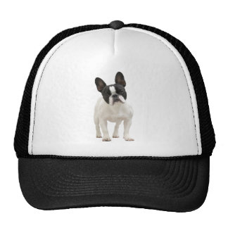 French Bulldog cute photo hat, cap, gift idea Cap