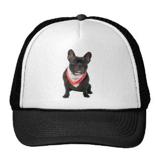 French Bulldog, dog cute beautiful photo, gift Mesh Hats
