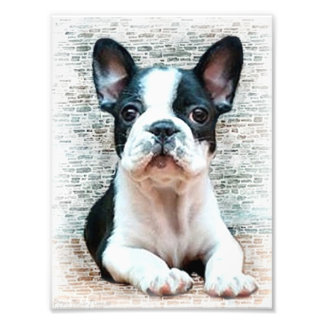 French bulldog dog photo print