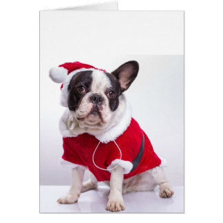 French Bulldog In Santa Costume For Christmas Card