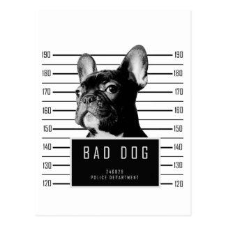French Bulldog Mugshot Shirt Postcard