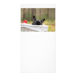 french bulldog peeking puppy photo card