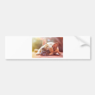 French Bulldog Pet Bumper Sticker