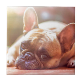 French Bulldog Pet Tile
