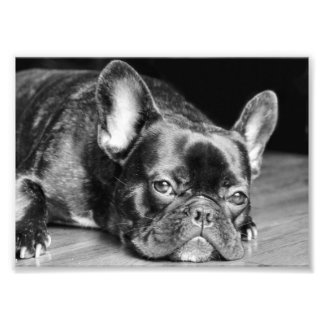 French Bulldog Photo Print