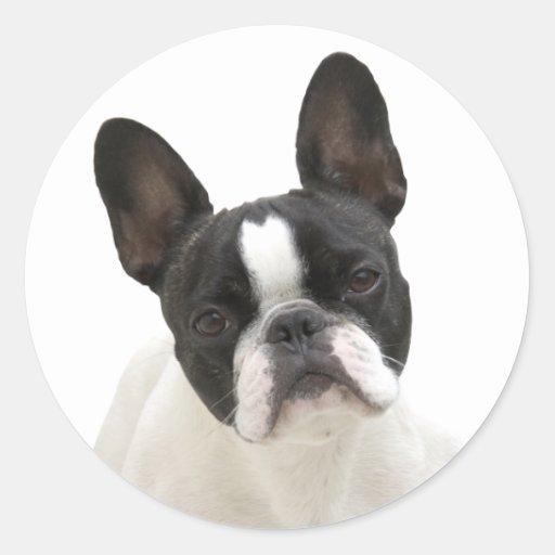 French Bulldog photo round stickers, gift idea