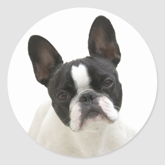 French Bulldog photo round stickers, gift idea Round Sticker