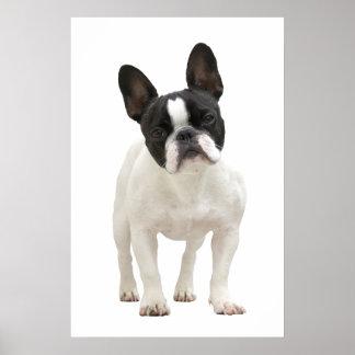 French Bulldog poster, print, gift idea Poster