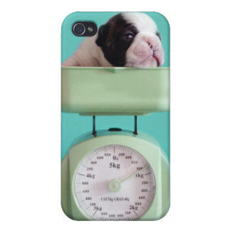 French bulldog puppy checking weight. case for iPhone 4