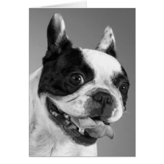 French Bulldog Puppy Dog Blank Note Card